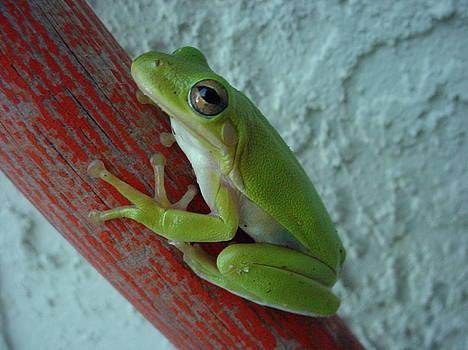 Frog on Pole I by Lara Gill