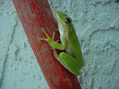Frog on Pole II by Lara Gill
