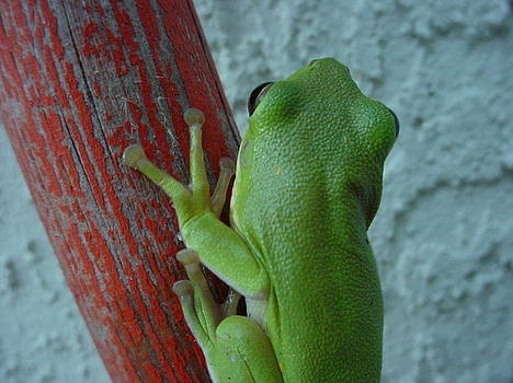 Frog on Pole III by Lara Gill