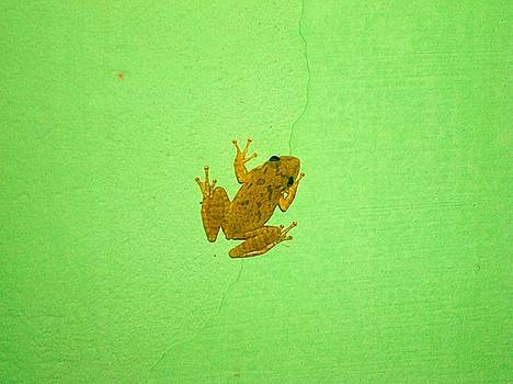 Paulo Zerbato - Frog