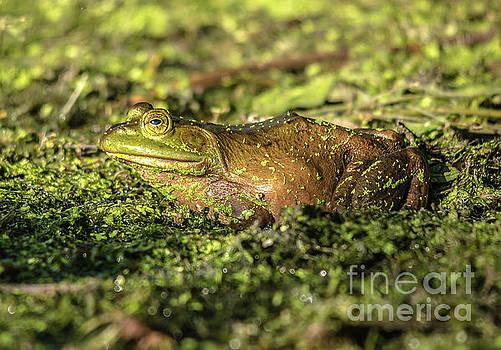 Frog Profile by Cheryl Baxter