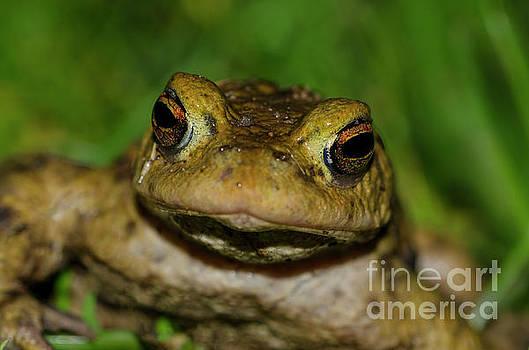 Frog by Steev Stamford