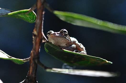 Wayne Nielsen - Frog with Twinkle in Eye