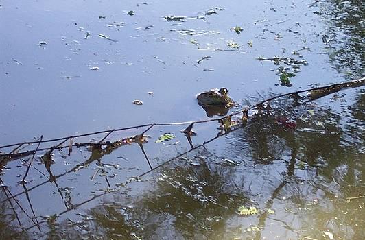 Froggie 4 by Anna Villarreal Garbis
