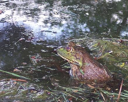 Froggie II by Anna Villarreal Garbis