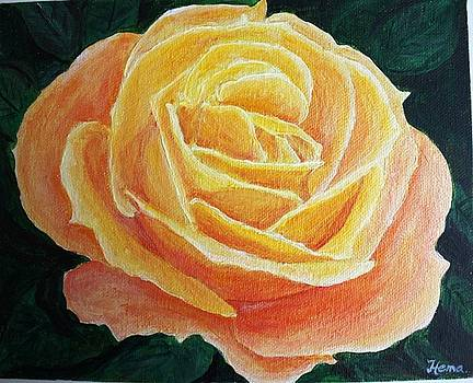 From my garden - Orange Rose by Hema Sukumar