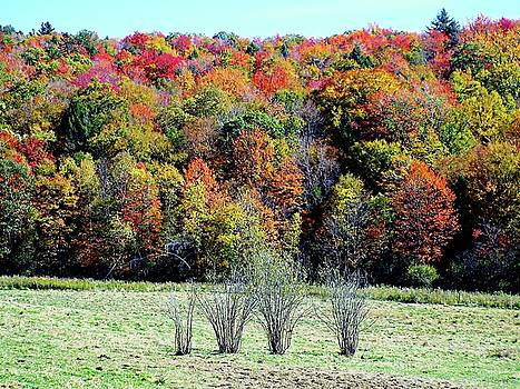 From New Hampshire with Love - Fall Foliage by Joseph Hendrix