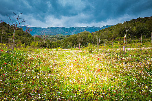 From winter to spring by Stavros Argyropoulos