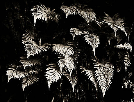 Marilyn Hunt - Fronds