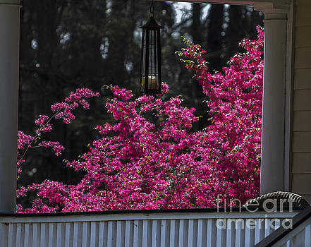 Dale Powell - Front Porch Bursting with Spring Color