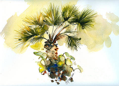 Frorida Fan Palm by P Anthony Visco