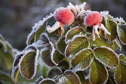 Frost 3 by Stanislovas Kairys