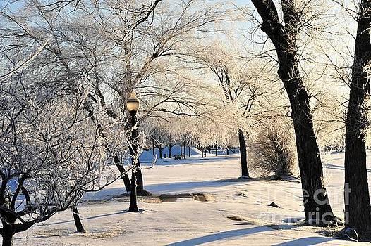 Terri Gostola - Frost Adorns the Cadillac City Park