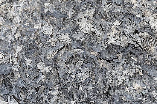 Frost crystals by Jennifer McCallum