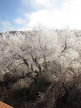 Frost Fringed Tree by Debi K Baughman