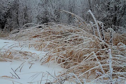 Sandra Foster - Frost Laden Grasses