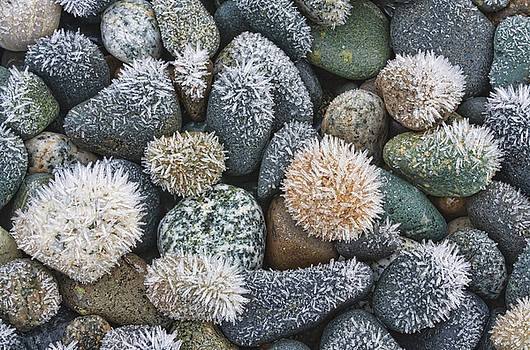 Frost on the rocks by Darryl Luscombe