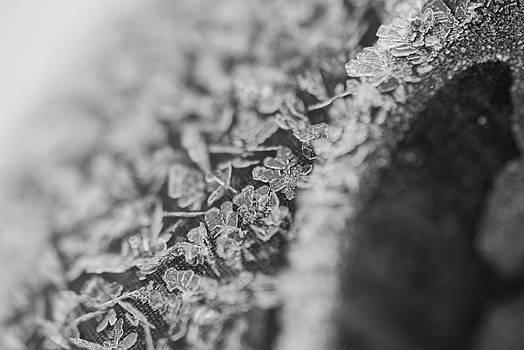 Frost by Patricia Gapske