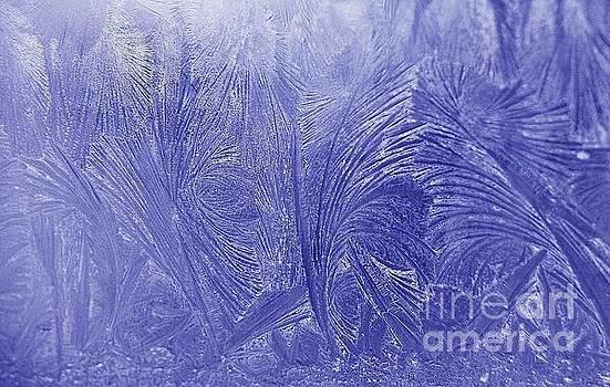 Terri Gostola - Frost Upon the Window Pane
