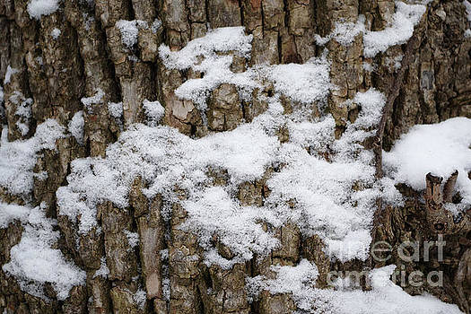 Frosted Bark by R V James