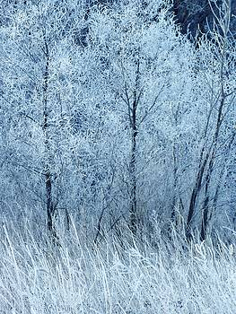 Frosted Beauty by Lori Frisch