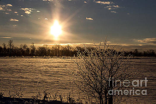 Frosted Branches and Sunrise by Marj Dubeau