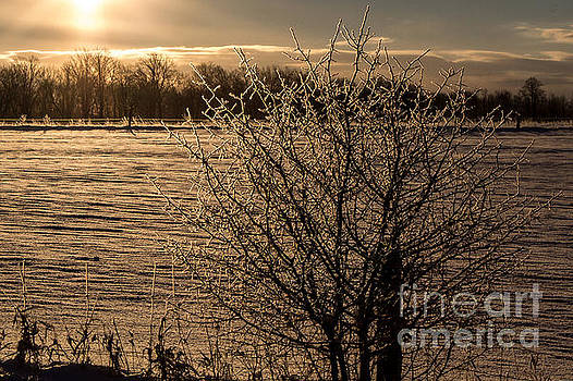 Frosted Branches by Marj Dubeau