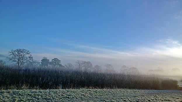 Frosted Hedgerow by Anne Kotan