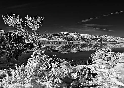 Frosted Lake by Chris Morrison