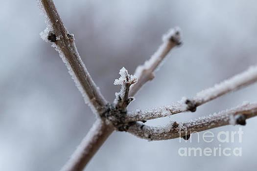 Frosted Morning by Ana V Ramirez
