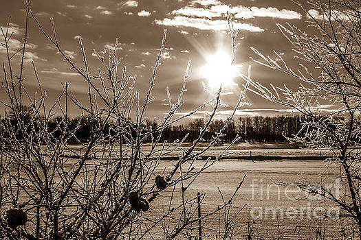 Frosted Tips by Marj Dubeau