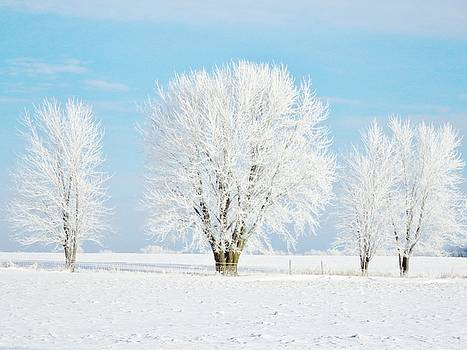 Frosted Tree Quartet by Lori Frisch