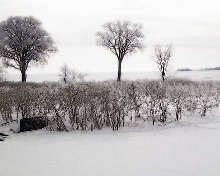 Frosted Trees by the Lake 4 by George Fagnan
