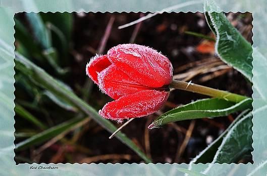 Kae Cheatham - Frosted Tulip
