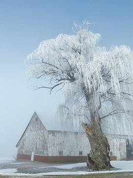 Frosted Willow  by Lori Frisch