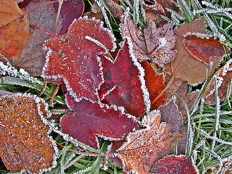 Frosty Autumn Leaves by Patricia Whitaker