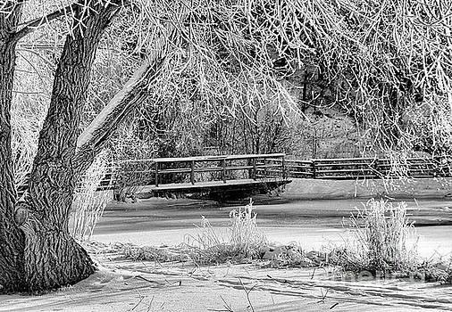 Roland Stanke - frosty bridge