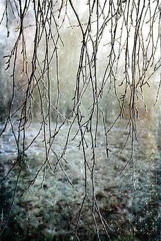 Frosty Decor by Randi Grace Nilsberg
