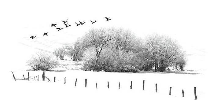 Frosty Flight by Ramona Murdock