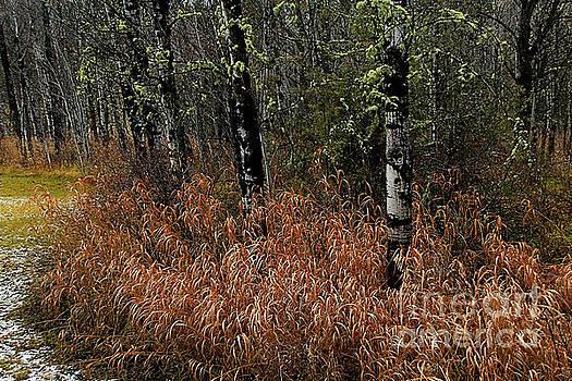 Roland Stanke - Frosty Grasses