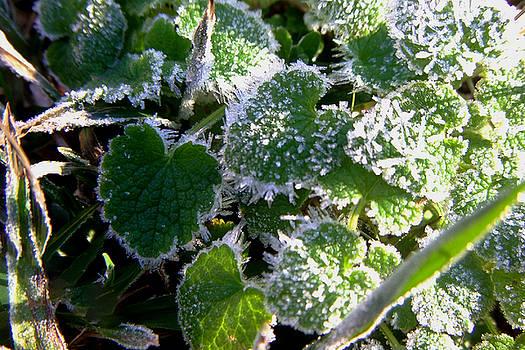 Frosty Heart Leaf by Karen Roberson