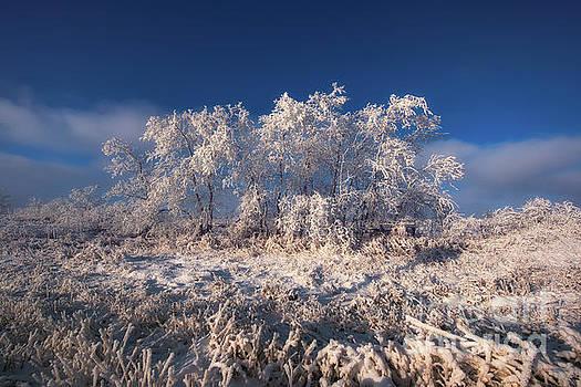 Frosty by Ian McGregor