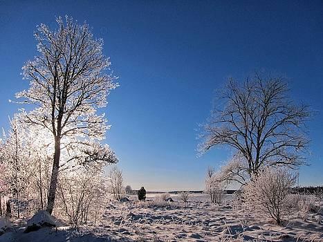 Frosty Landscape by Per Lidvall