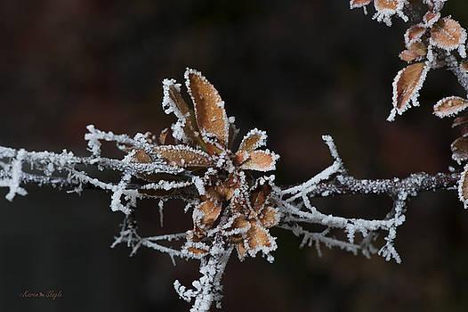 Karen Slagle - Frosty Leaves