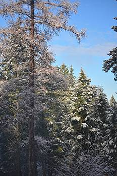 Frosty Morning by D Nigon