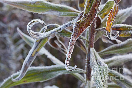 Jonathan Welch - Frosty Morning