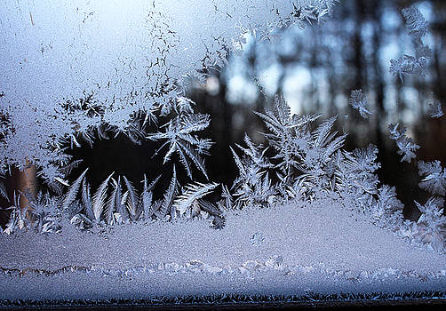 Frosty Morning Window by Liz Allyn