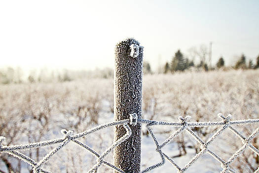Frosty Mornoing by Adam Sworszt
