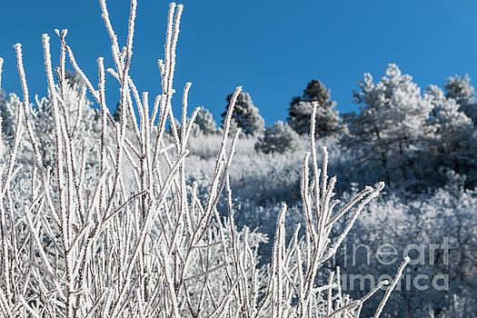 Steve Krull - Frosty Pikes Peak Foliage