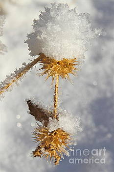 Frosty Spikes by Rick  Monyahan